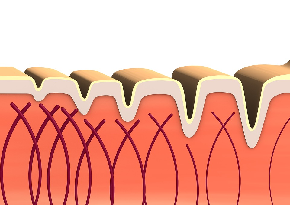 diagram of collagen fibres under skin