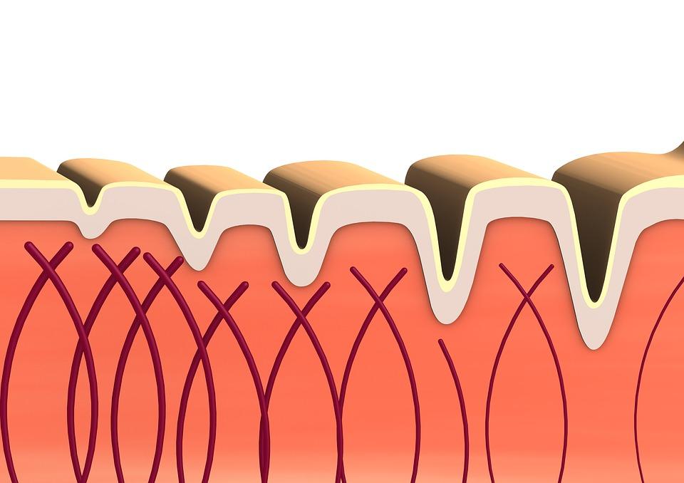 diagram of collagen fibres under skin