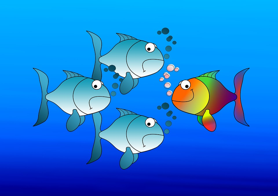 3 Fish swimming in one direction, 1 fish swimming in opposite direction